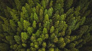 How to Use Evergreen Content to Drive Results Year-Round?